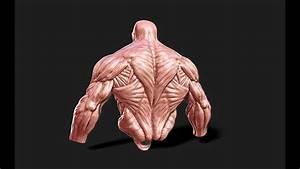Anatomy Muscle Man - Dynamash In Zbrush 4r2