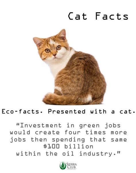 Cat Facts Meme - cats facts green jobs mean big bucks the green life