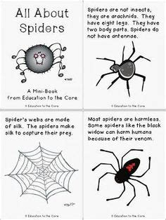 learn   life cycle   spider  color  life