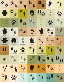 North American Animal Track Identification