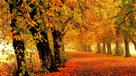Autumn Wallpapers 4k by Wallpaper Autumn Park Forest Leaves 4k Nature 588
