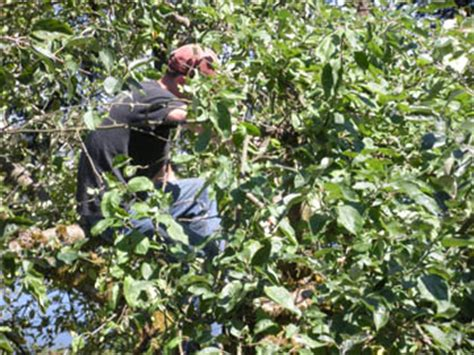 pruning apple trees in autumn solar panel construction on our roof more pictures the biking architect
