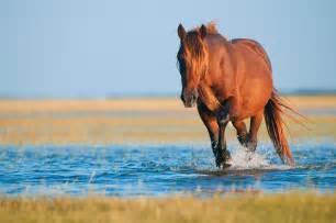 Wild Horse Tours Corolla
