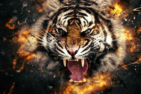 Abstract Tiger Wallpaper Wallpapersafari