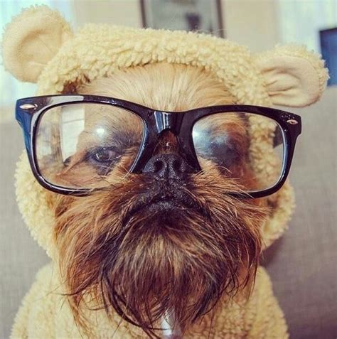 ideas  ewok dog costume  pinterest baby