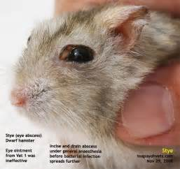 sty cat skin 031208asingapore toa payoh veterinary vets cat rabbits