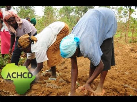 introduction the kogi state agriculture enterprise development program