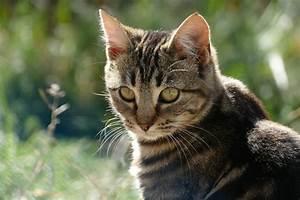 Cat Liver Failure Symptoms  U0026 Signs