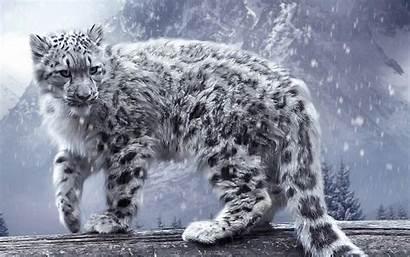 Snow Leopard Animals Winter Leopards Nature Desktop