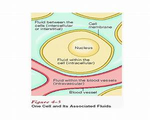 25  Best Ideas About Extracellular Fluid On Pinterest