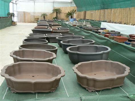 poteries de grande taille p 233 pini 232 re bonsai de jacques