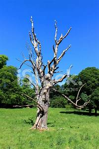 Tronc Bois Flotté : tronc d 39 arbre mort branches de marronnier bois flott ciel bleu photos ~ Dallasstarsshop.com Idées de Décoration