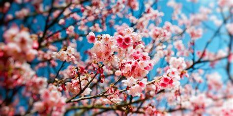 amour de cuisine fr printemps pour quoi la saison débute le 20 mars