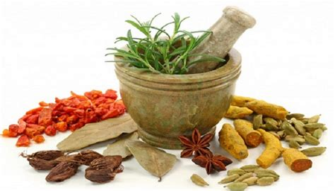 5 jenis jamu kuat herbal pria herbaterapi
