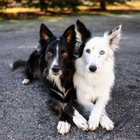 สองน้องหมาคู่ซี๊ ตัวติดกันไม่ยอมห่าง แถมยังโพสต์ท่ากอดสุด ...
