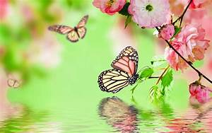 Images Of Spring Butterfly Fruhling Wallpaper | Wide HD ...