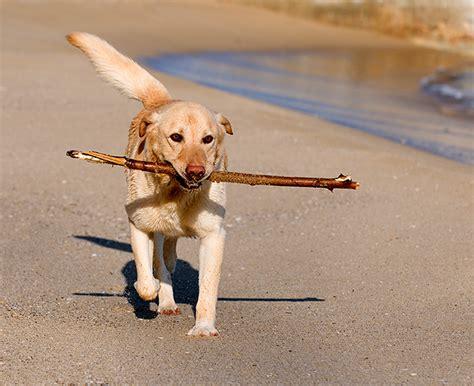 vet     dogs age