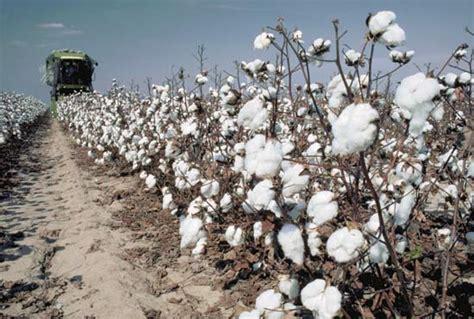 cotton planters cotton britannica homework help