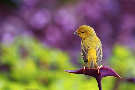 einheimische vögel bilder die 79 besten tiere hintergrundbilder