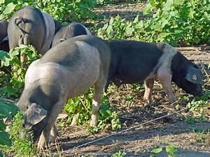 Animals: Carnivore, Herbivore or Omnivore? science made simple