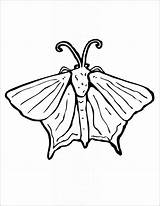 Coloring Moth sketch template