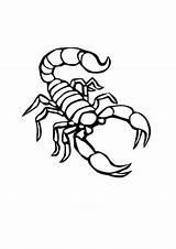 Scorpion Coloring Outline Printable Drawing Animal Desert Tattoo Sheets Tattoos Bestcoloringpagesforkids Drawings Patterns Arthropod Stencil Segments Belongs Formed Several Legs sketch template