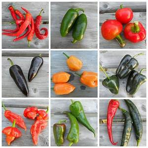 11 different varieties of hot peppers in   Gotta Eat Your ...