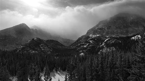 Download Free Black and White Forest Wallpaper wallpaper