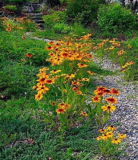 wildflower garden ideas