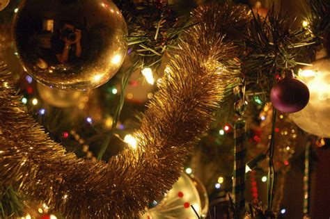 christmas tree closeup pictures   images
