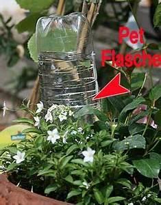 Pflanze In Flasche : die besten 17 ideen zu bew sserung auf pinterest tr pfchenbew sserung und g rtnern ~ Whattoseeinmadrid.com Haus und Dekorationen