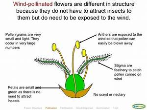 How Is The Stamen Of A Plant Adapted For Pollination