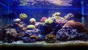 commencer un aquarium d eau de mer 28 images le bac r With tapis champ de fleurs avec canapé convertible quotidien 2 places