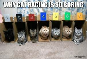 cat cing why cat racing is sooo boring weknowmemes