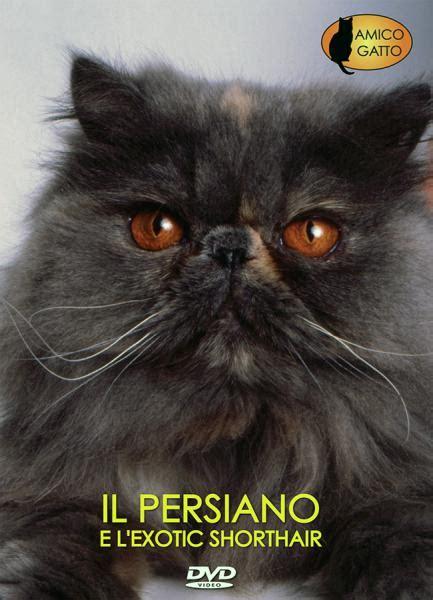 Gatti Persiani Prezzi Gatto Persiano Shorthair Documentario Dvd