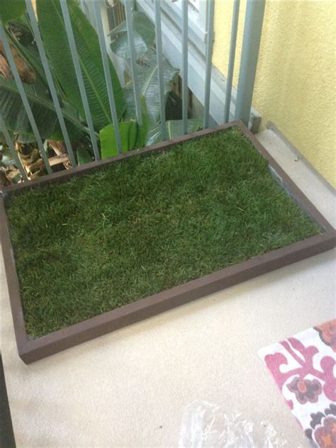 apartment dogs litter box grass potty patch litter