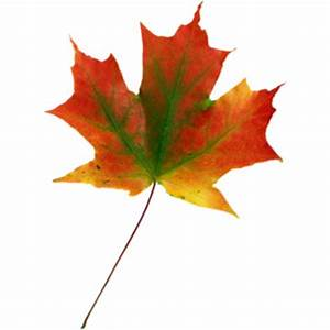 Image Of Single Leaves - ClipArt Best