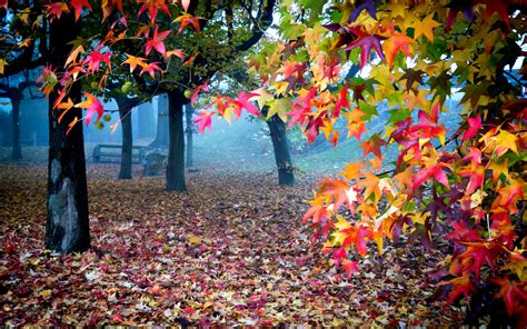 Colourful Autumn Wallpaper by Beautiful Autumn Colors Wallpapers 1680x1050 1042106