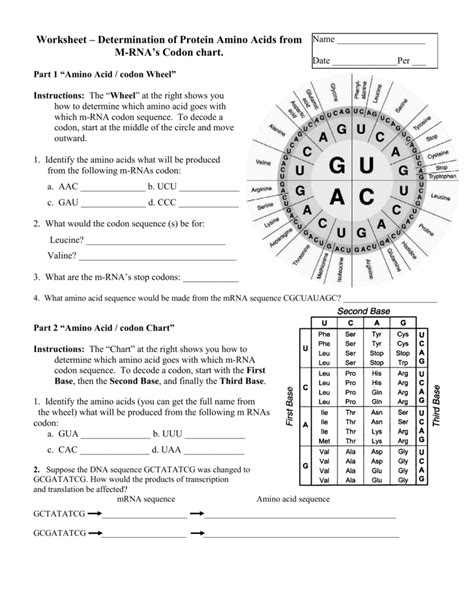 Amino Acid Codon Chart Worksheet  Codon Worksheet Homeschooldressage Com Ayucar
