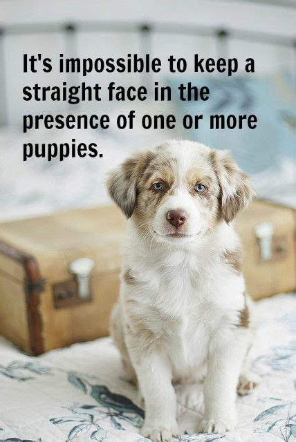 puppies happiness dogs training humor  dog