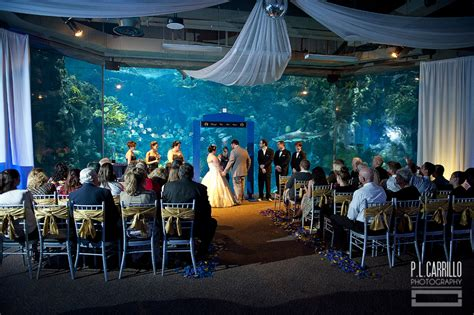 Florida Aquarium Wedding ? St. Petersburg Wedding Photographer » P.L. Carrillo Photography