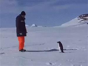 Penguin Falling GIFs - Find & Share on GIPHY