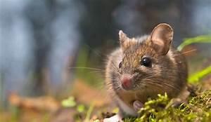 Comment Se Débarrasser Des Souris Dans Une Maison : comment se d barrasser des rats dans mon jardin design de maison ~ Nature-et-papiers.com Idées de Décoration