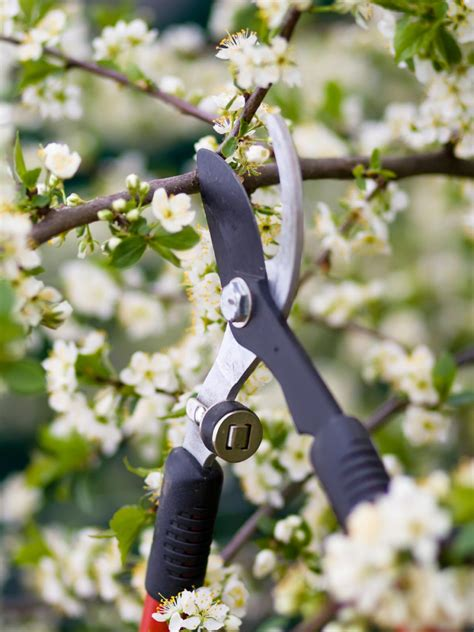 pruning trees how to prune a tree hgtv