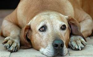 prostate problems could your dog be suffering