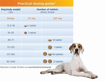 Previcox Dogs Dosing Dose Kg Daily Tablets