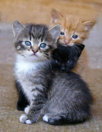 cute pictures  cats community google