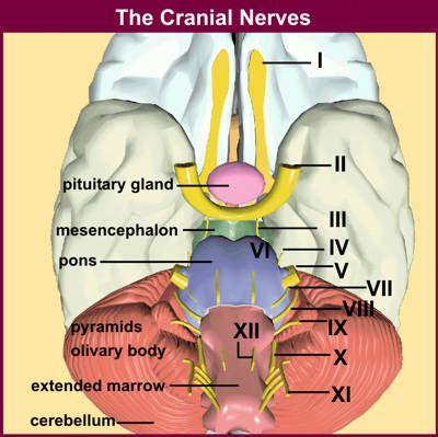 Facial Paralysis: causes, symptoms, & diagnosis - healthline