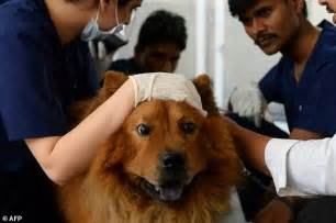 indian animal clinic india s pered pets up new treatments daily mail