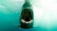 Shark Night 3D Trailer - FilmoFilia